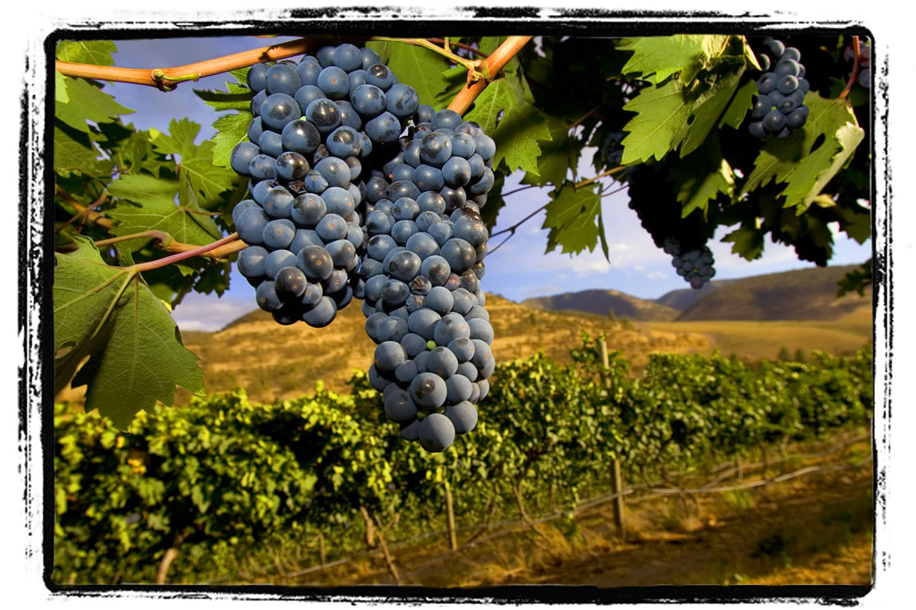 oregon wine tasting map with Vineyard on Harvest Time In Hood River additionally How To Make Your Ex Boyfriend Call You Or Answer The Phone likewise Les Vins Nord Am C3 A9ricains further 207252 as well The Impossibility Of Historical Flavour.