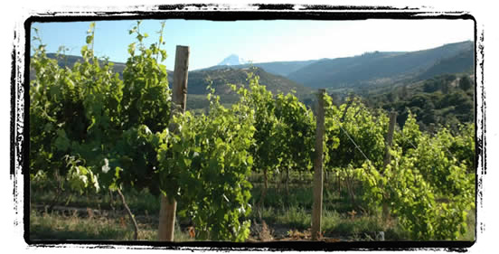 vineyard-hood